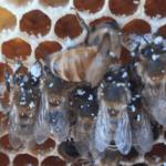 Beekeeping at the farm