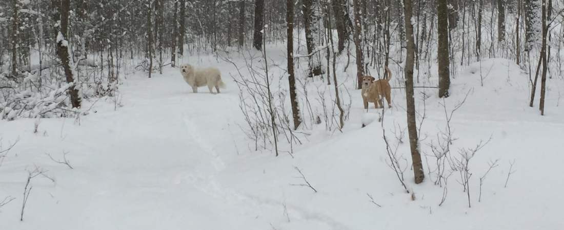 Winter at South Pond Farm: First Real Snow