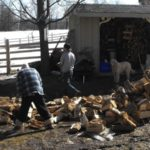 Wood Stacking, Year Two