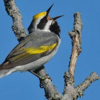 blog-earth-day-bird