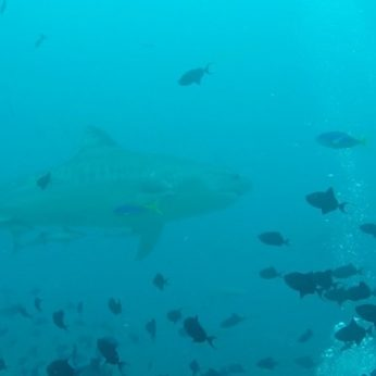 blog-shark-conservation-fiji-dive