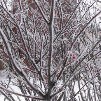 blog-winter-bush