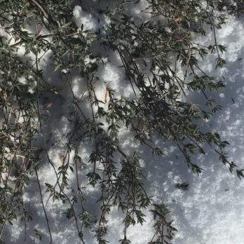 blog-winter-thoughts-thyme