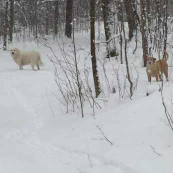 blog-winter-trail-dogs